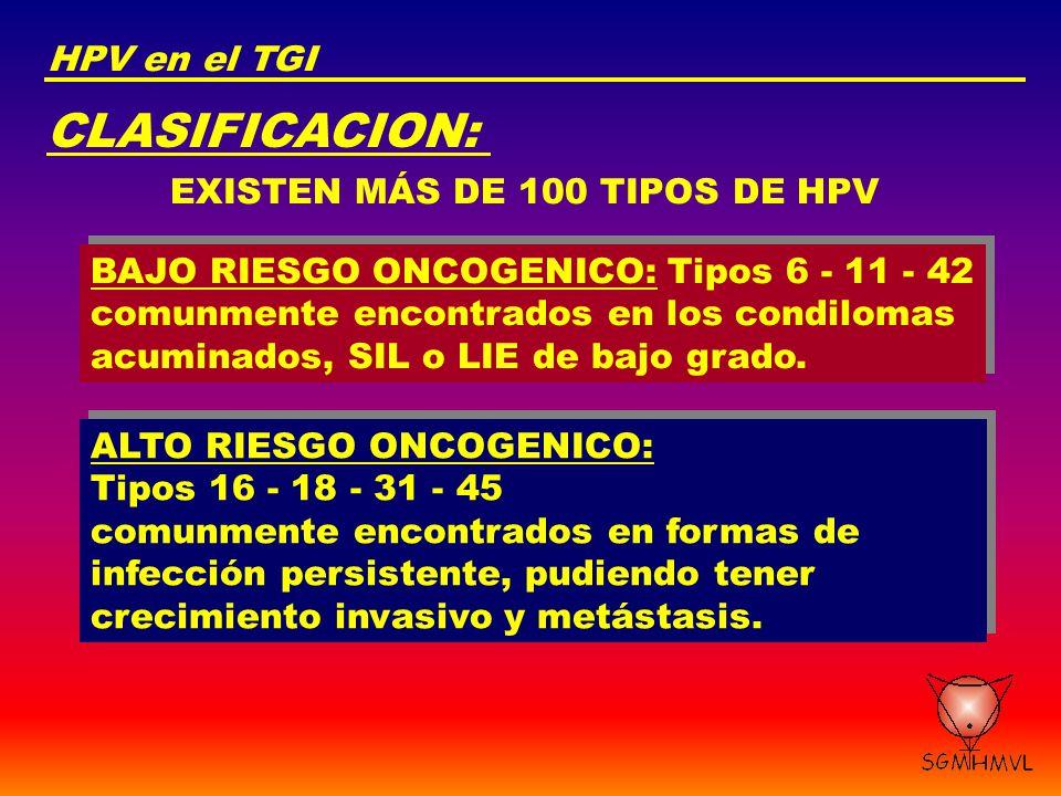 CLASIFICACION: HPV en el TGI EXISTEN MÁS DE 100 TIPOS DE HPV