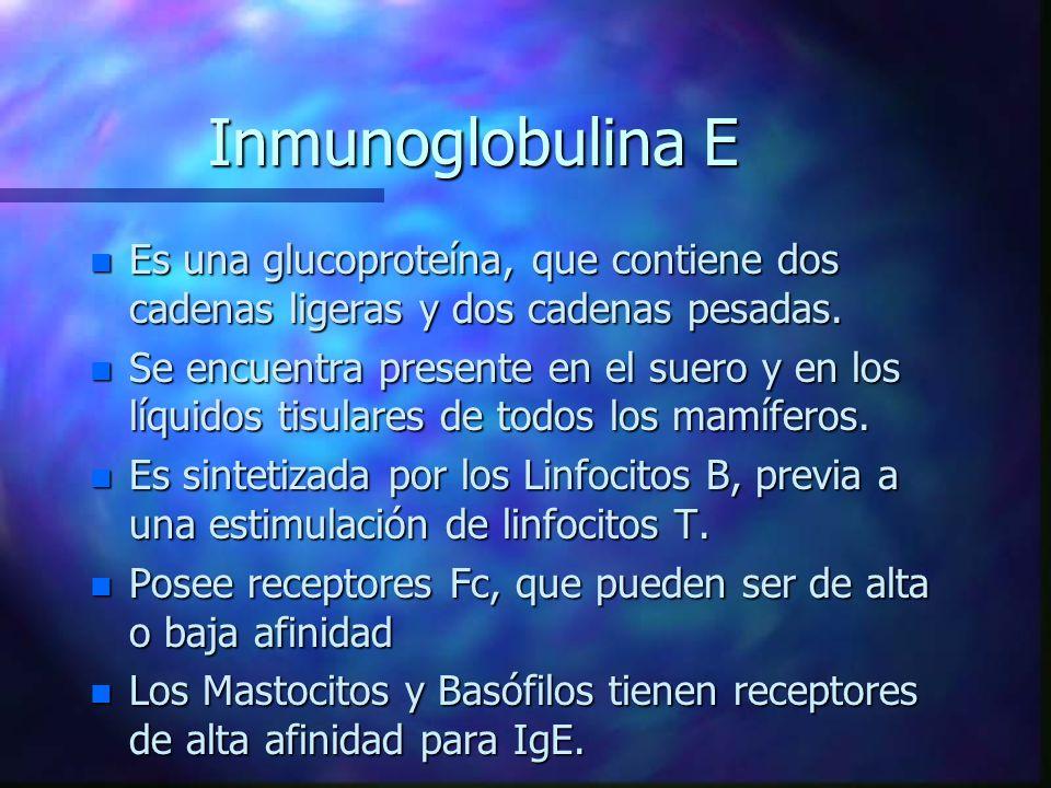 Inmunoglobulina E Es una glucoproteína, que contiene dos cadenas ligeras y dos cadenas pesadas.