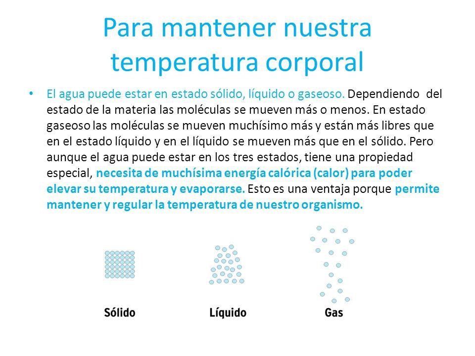 Para mantener nuestra temperatura corporal