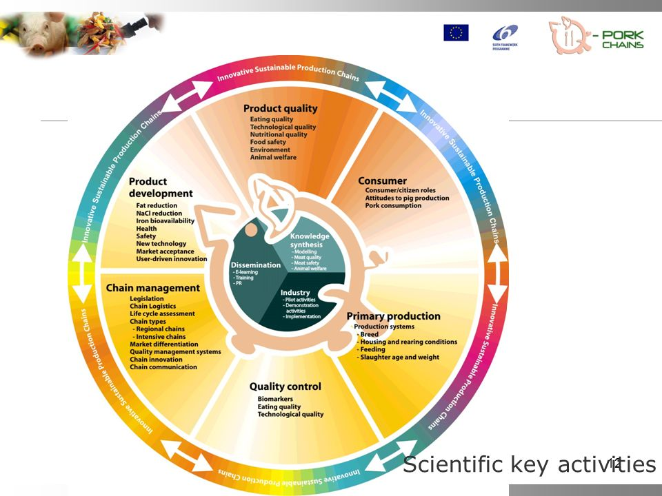 Scientific key activities