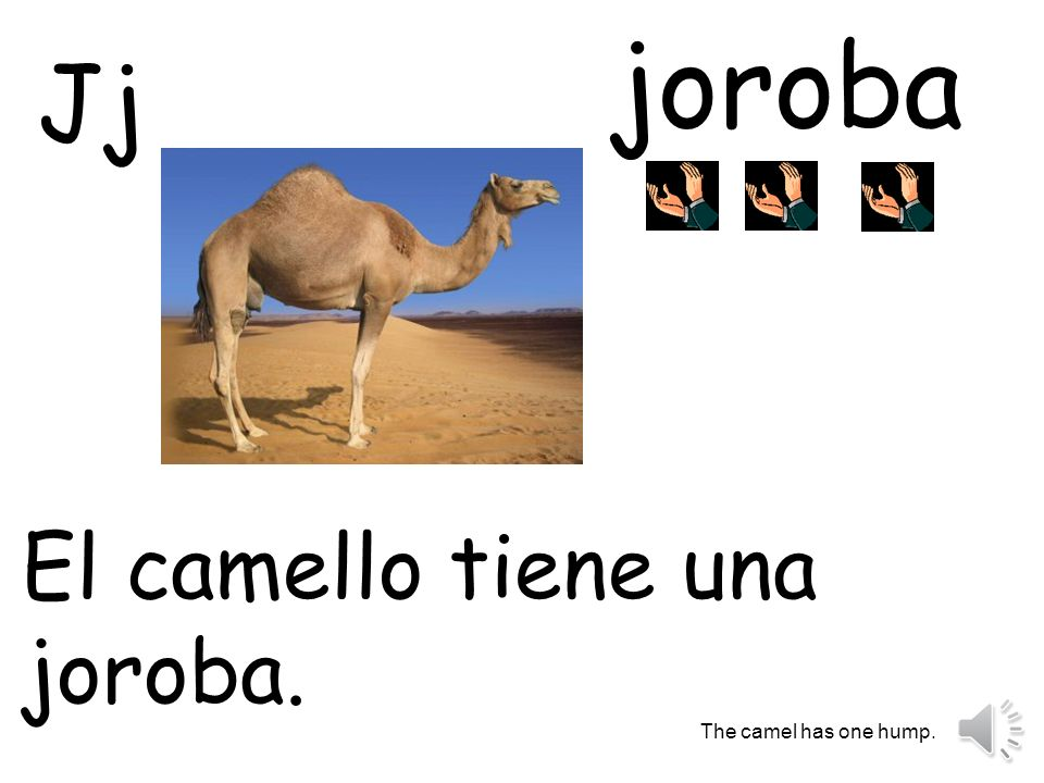 joroba Jj El camello tiene una joroba. The camel has one hump.
