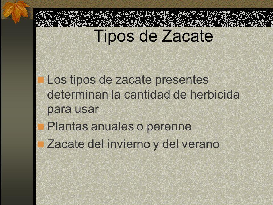 Tipos de Zacate Los tipos de zacate presentes determinan la cantidad de herbicida para usar. Plantas anuales o perenne.
