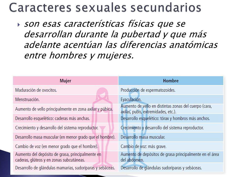Bonito Diferencias En La Anatomía Masculina Y Femenina Modelo ...