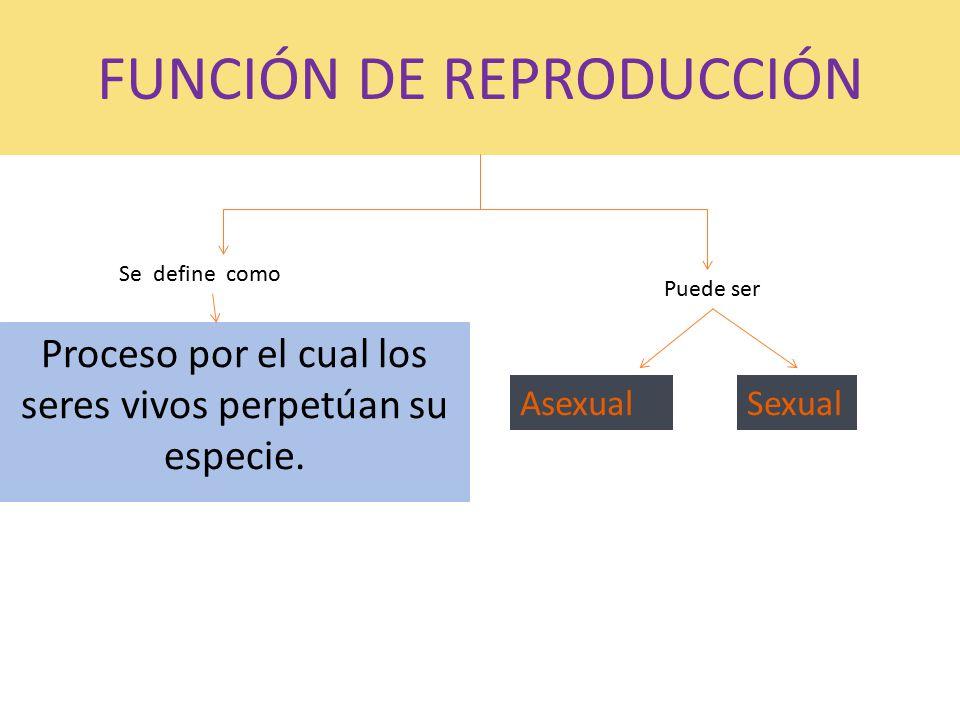 Funci n de reproducci n ppt video online descargar for Pececillo nuevo de cualquier especie