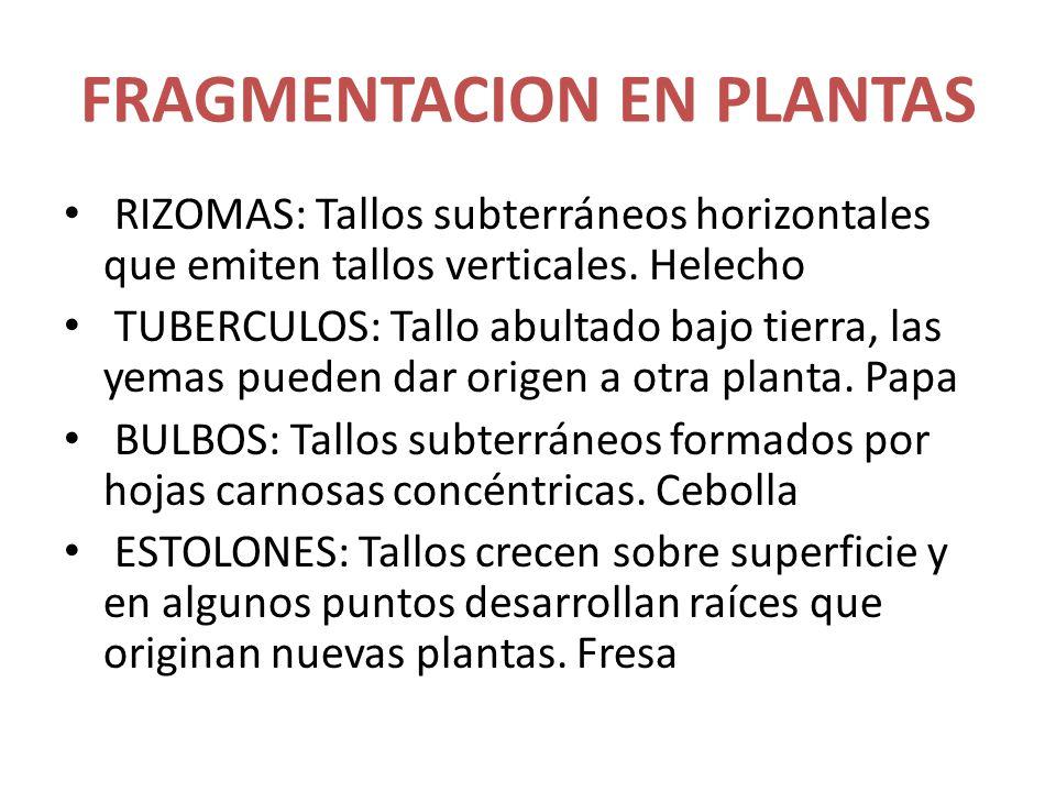 FRAGMENTACION EN PLANTAS