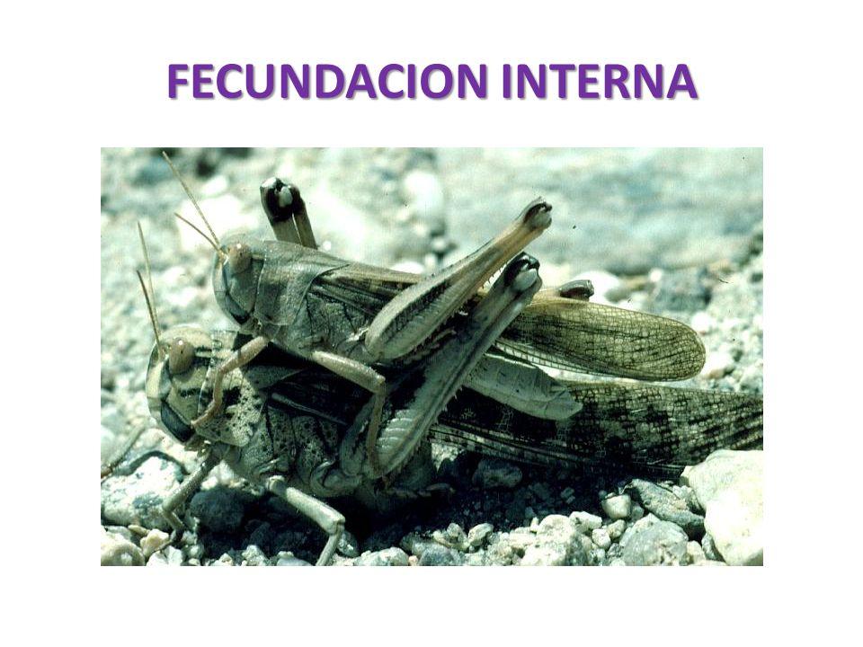 FECUNDACION INTERNA