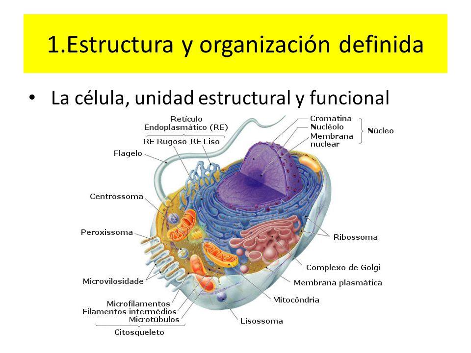 1.Estructura y organización definida