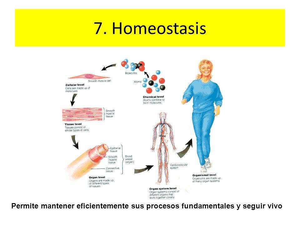 7. Homeostasis Permite mantener eficientemente sus procesos fundamentales y seguir vivo
