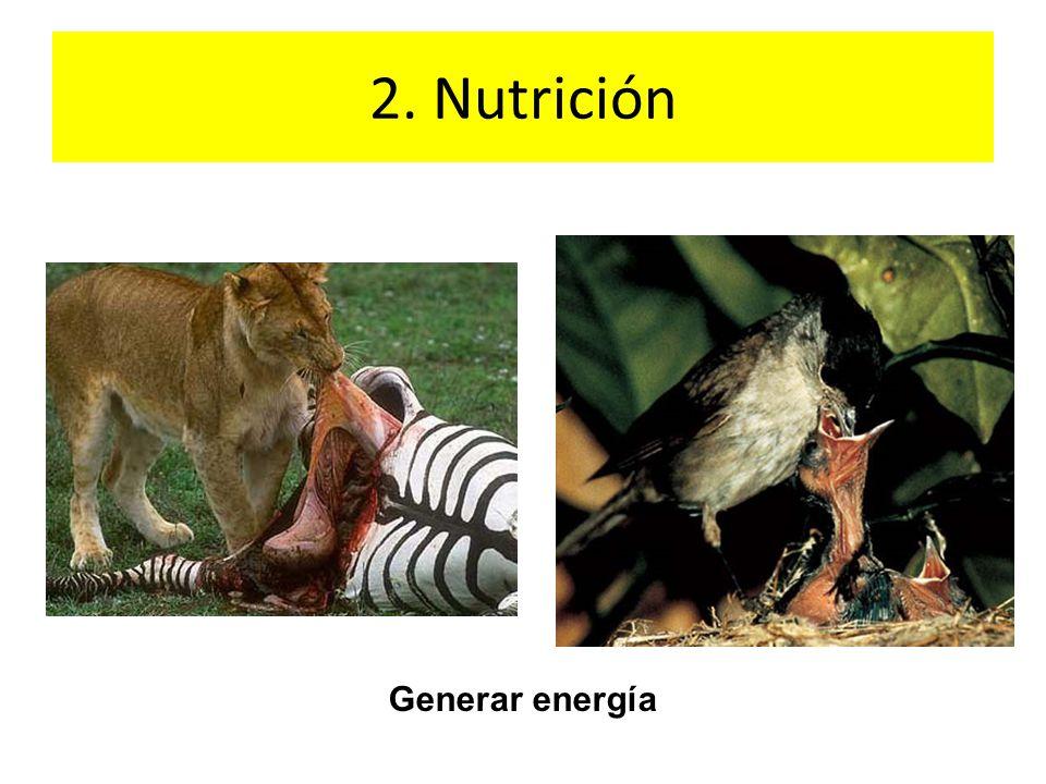 2. Nutrición Generar energía