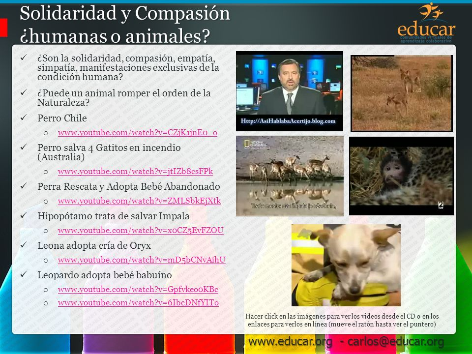 Solidaridad y Compasión ¿humanas o animales