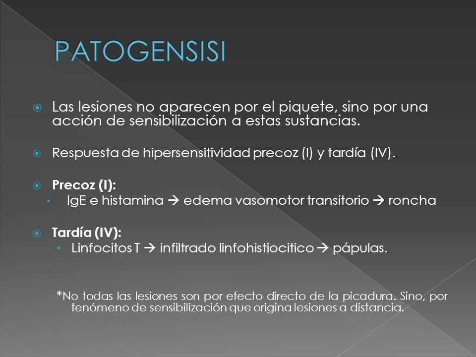 PATOGENSISI Las lesiones no aparecen por el piquete, sino por una acción de sensibilización a estas sustancias.