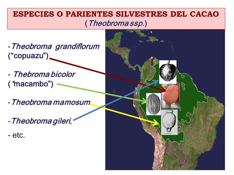 ESPECIES O PARIENTES SILVESTRES DEL CACAO