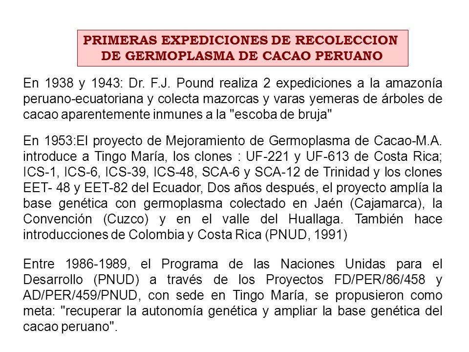 PRIMERAS EXPEDICIONES DE RECOLECCION DE GERMOPLASMA DE CACAO PERUANO