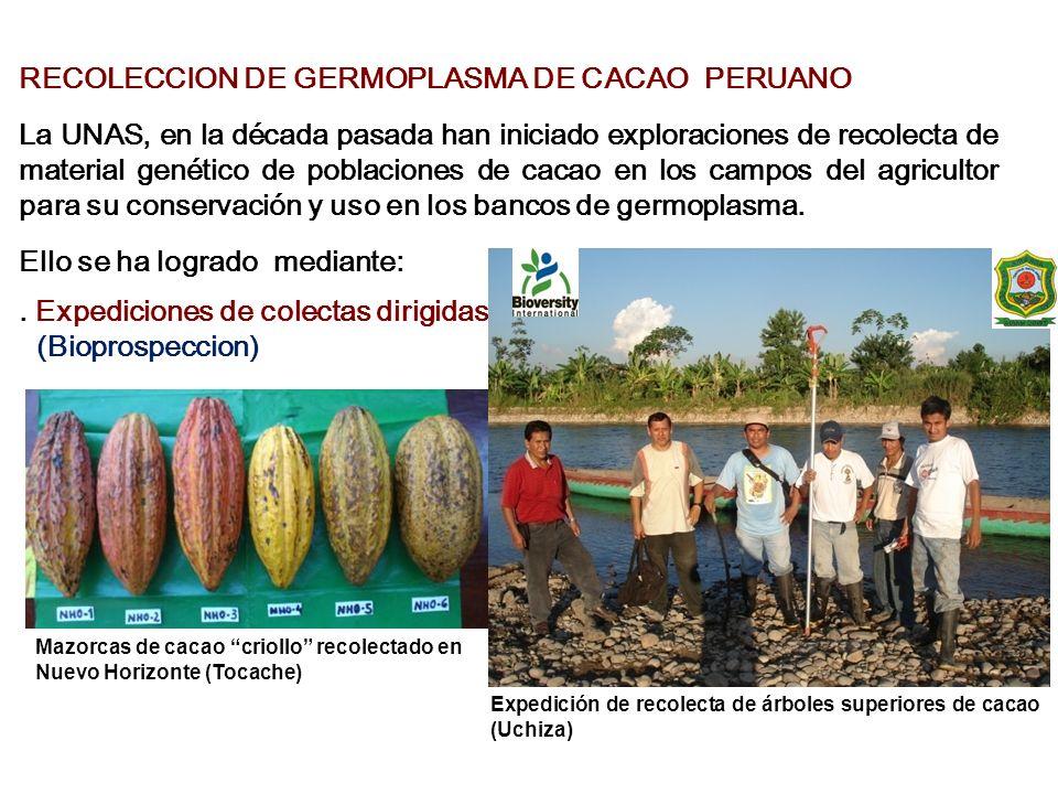 RECOLECCION DE GERMOPLASMA DE CACAO PERUANO