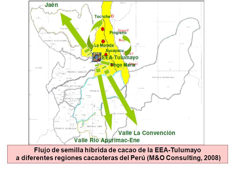 Flujo de semilla híbrida de cacao de la EEA-Tulumayo