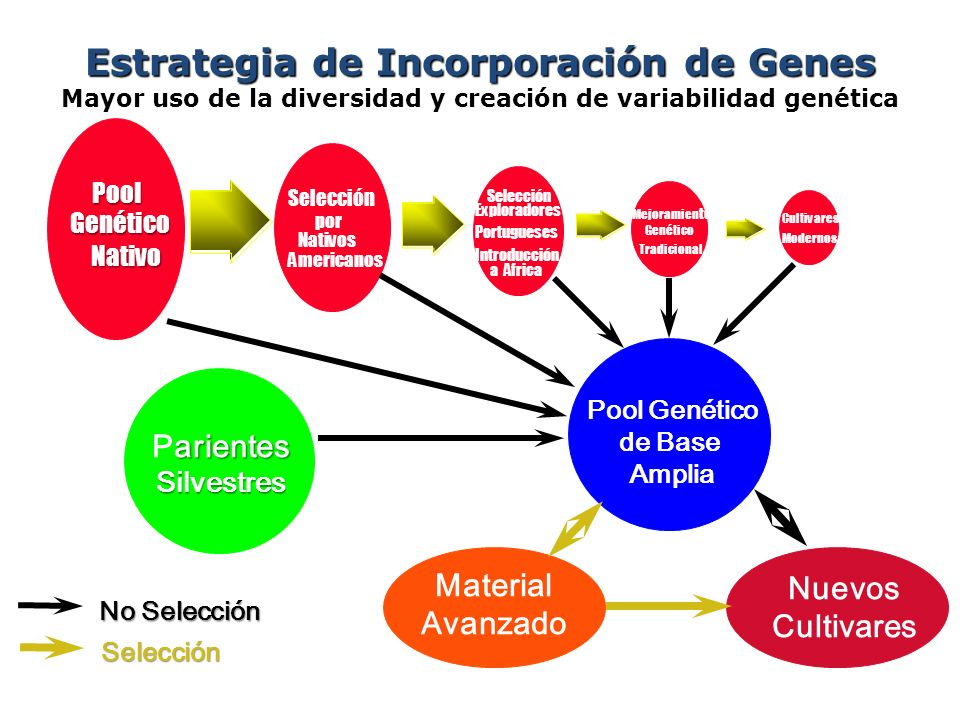 Estrategia de Incorporación de Genes Mayor uso de la diversidad y creación de variabilidad genética