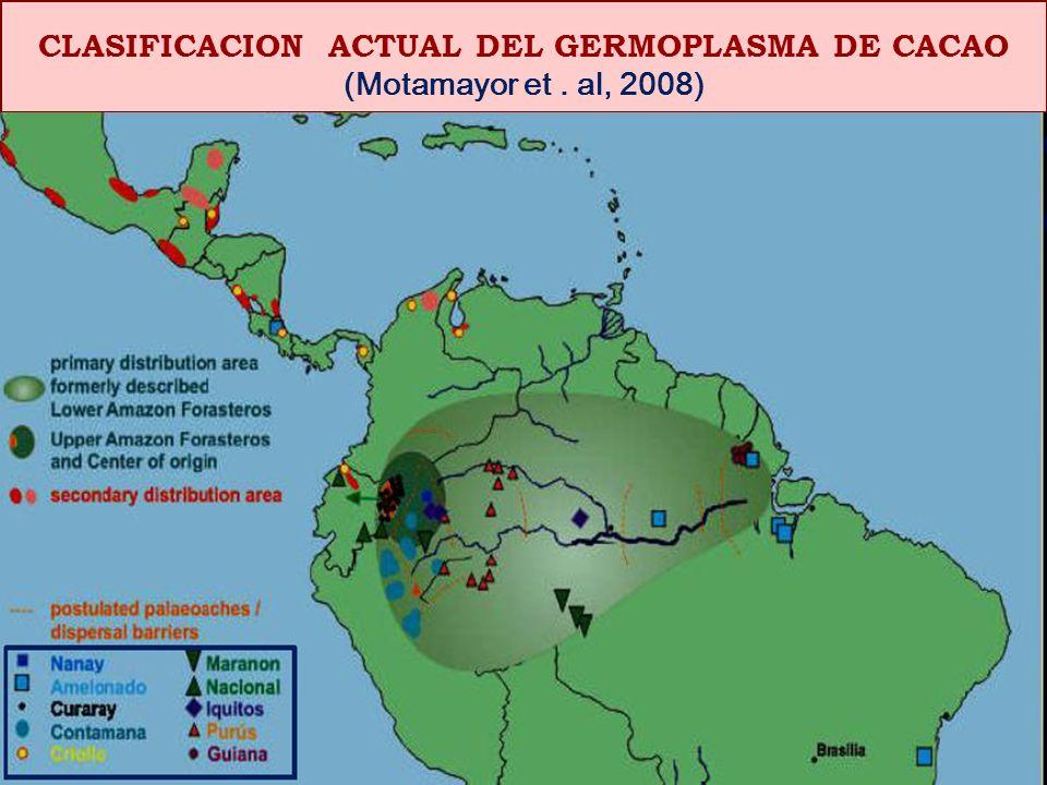 CLASIFICACION ACTUAL DEL GERMOPLASMA DE CACAO
