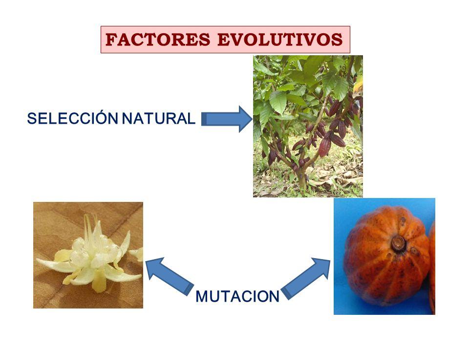 FACTORES EVOLUTIVOS SELECCIÓN NATURAL MUTACION