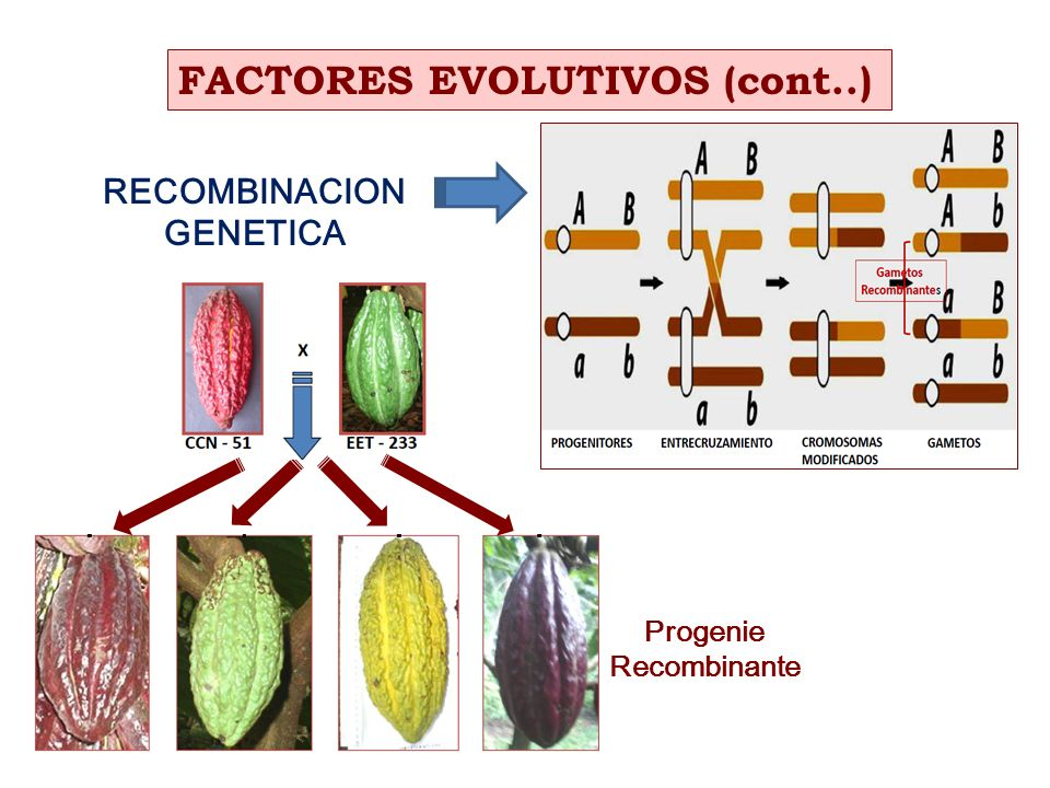 FACTORES EVOLUTIVOS (cont..)
