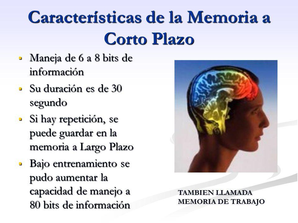 Características de la Memoria a Corto Plazo