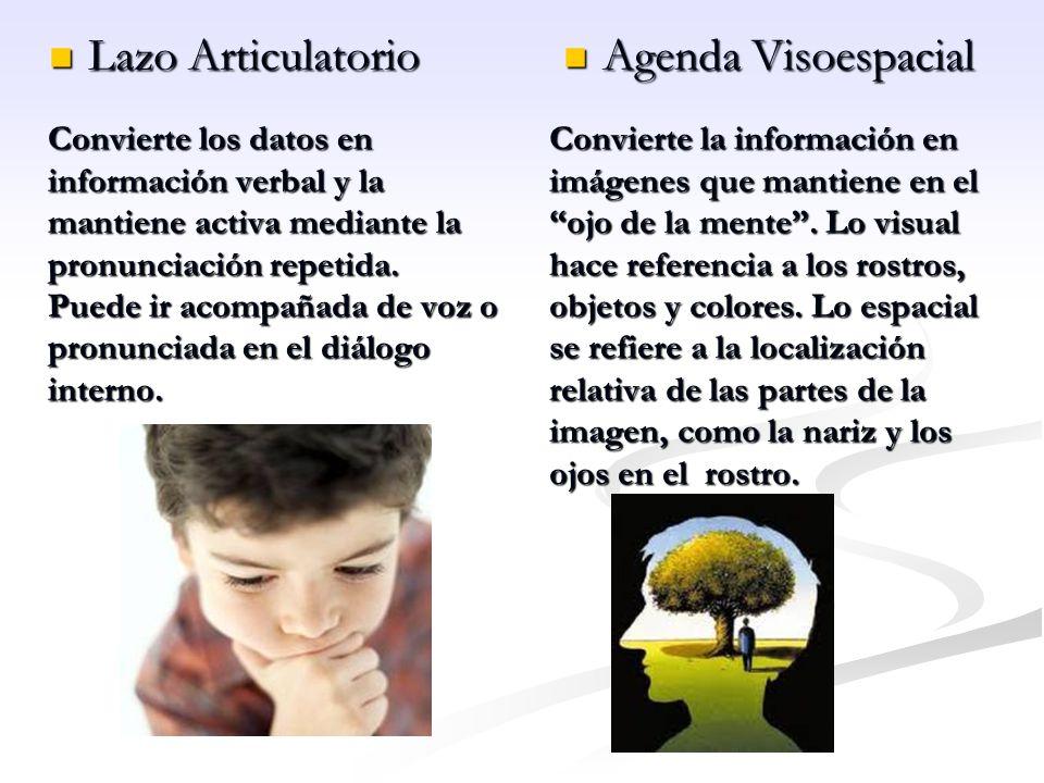 Lazo Articulatorio Agenda Visoespacial