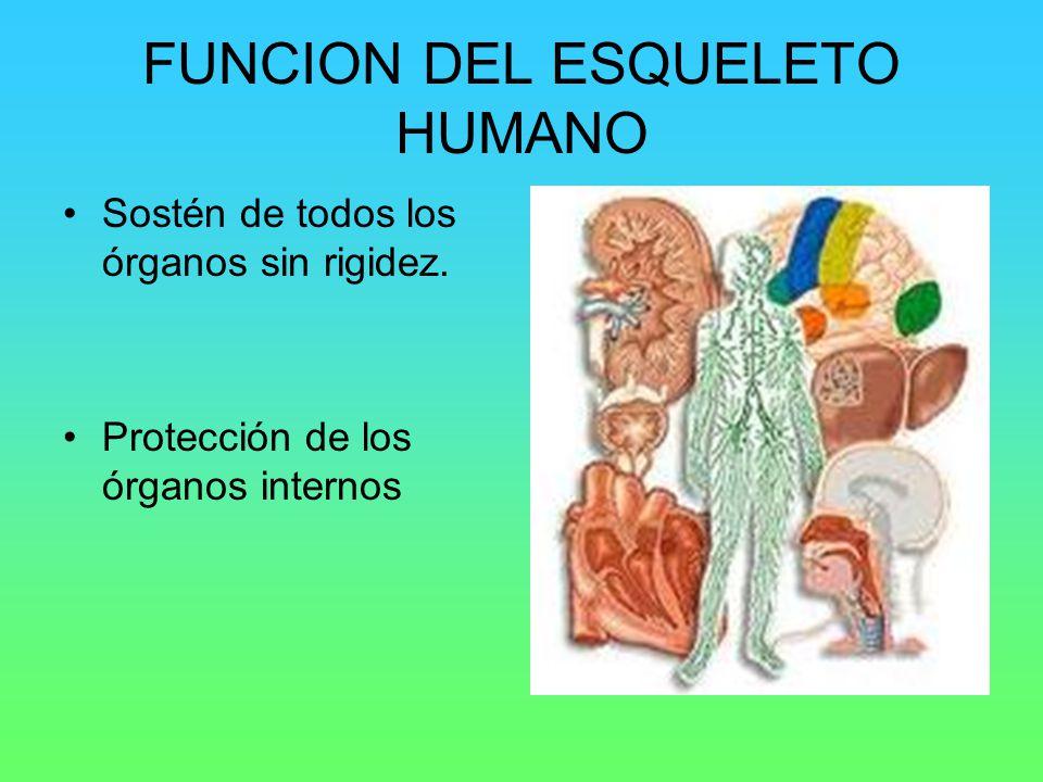 EL ESQUELETO HUMANO. - ppt video online descargar