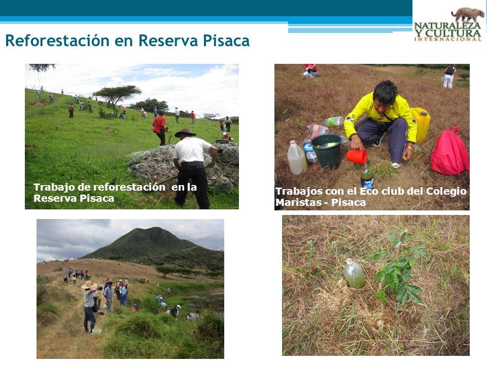 Reforestación en Reserva Pisaca