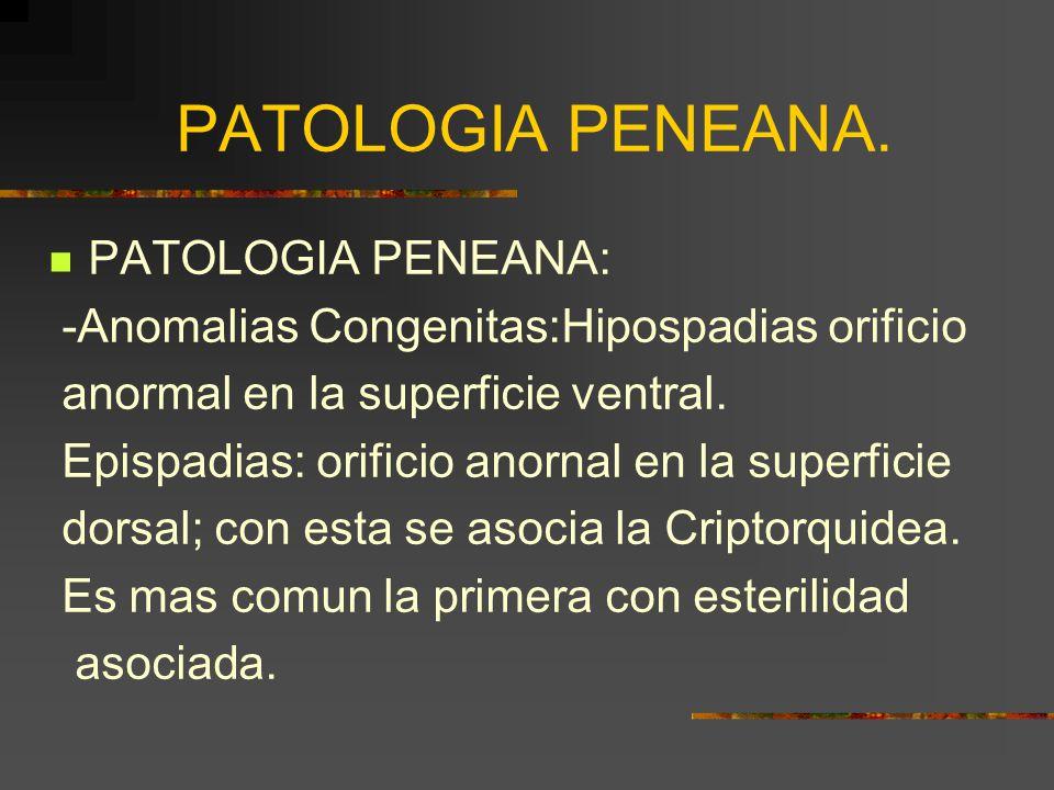 PATOLOGIA PENEANA. PATOLOGIA PENEANA: