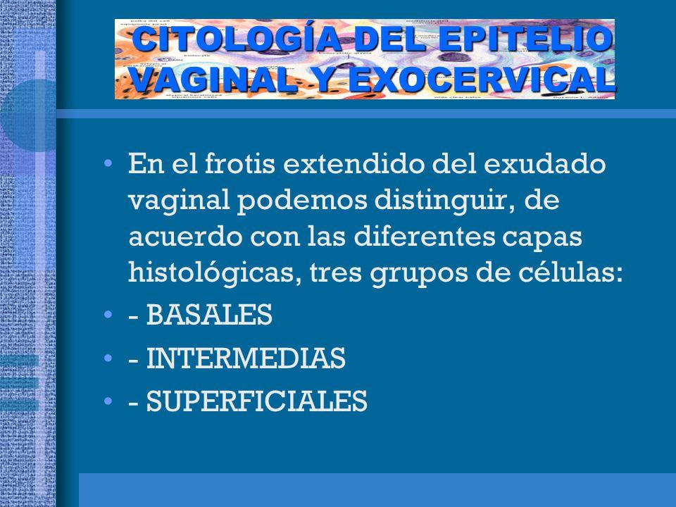 CITOLOGÍA DEL EPITELIO VAGINAL Y EXOCERVICAL