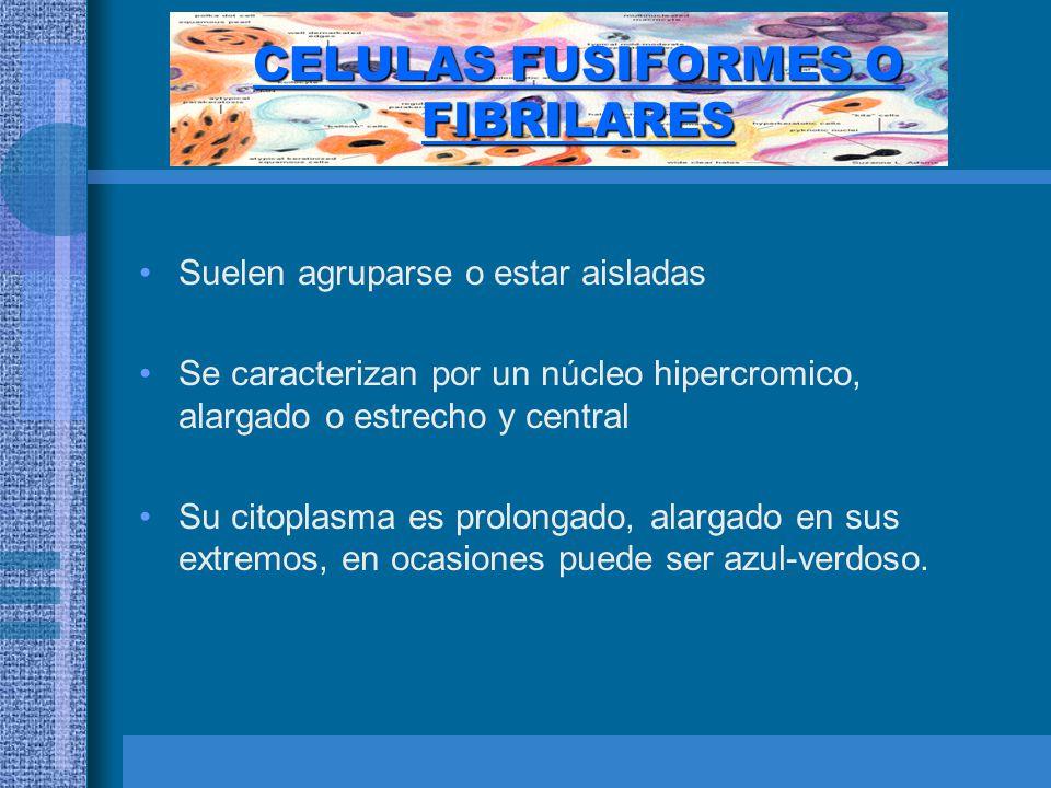 CELULAS FUSIFORMES O FIBRILARES
