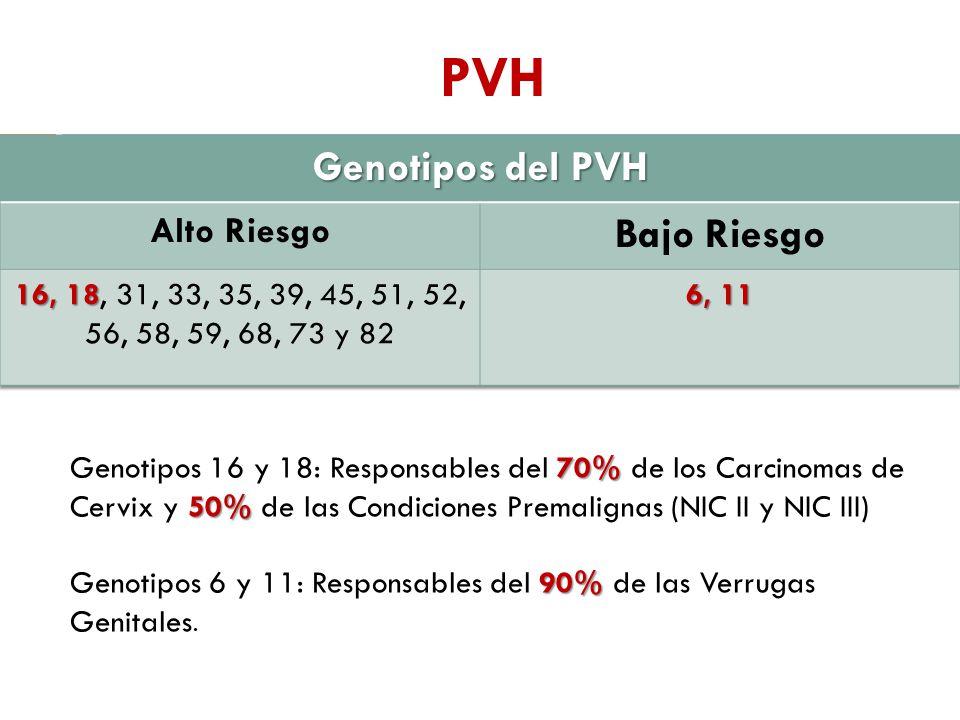 PVH Genotipos del PVH Bajo Riesgo Alto Riesgo