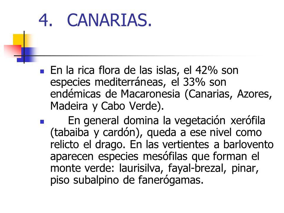4. CANARIAS.