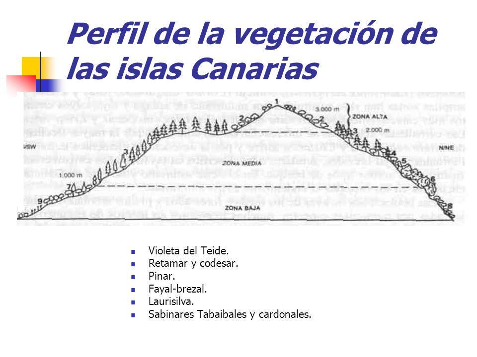 Perfil de la vegetación de las islas Canarias