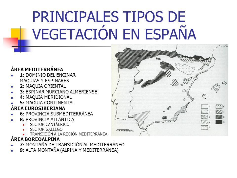 PRINCIPALES TIPOS DE VEGETACIÓN EN ESPAÑA
