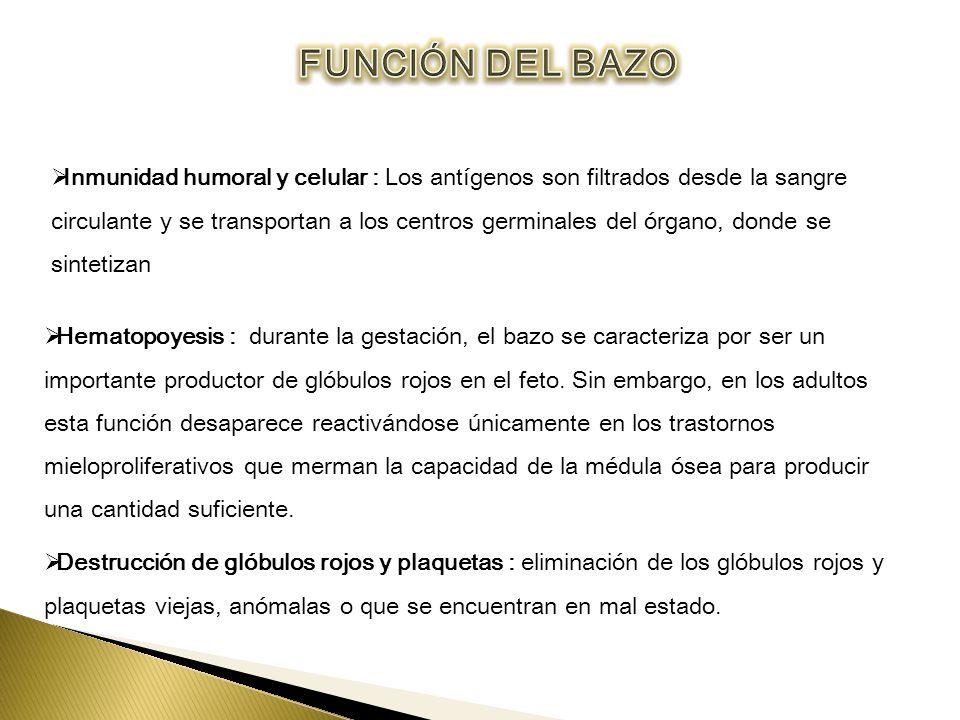 Encantador Funciones Del Bazo Molde - Anatomía de Las Imágenesdel ...