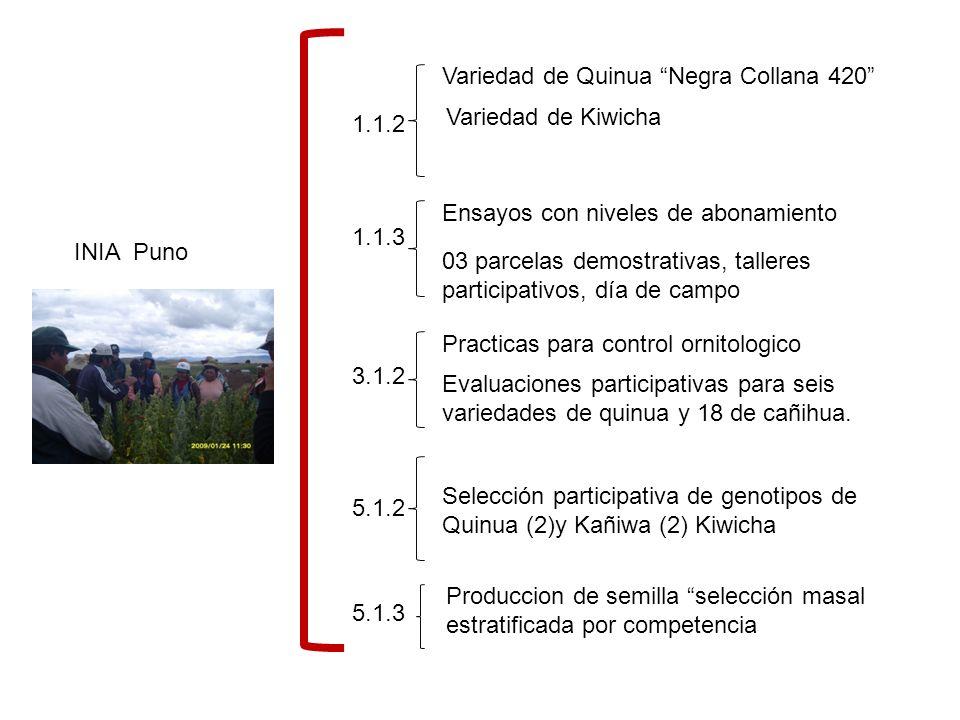 Variedad de Quinua Negra Collana 420