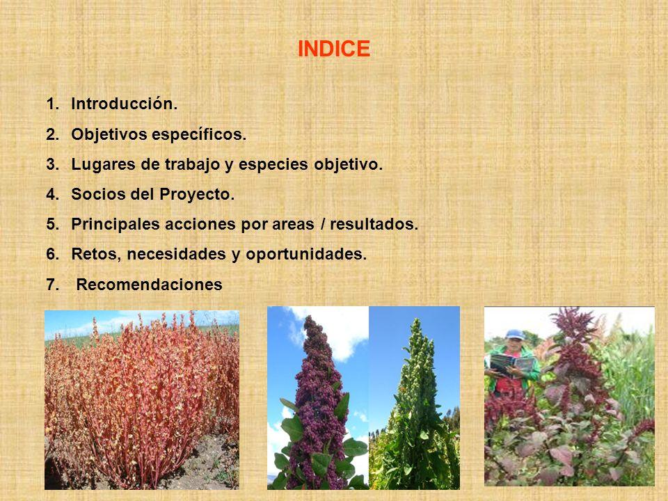 INDICE Introducción. Objetivos específicos.