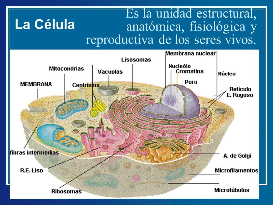 Único Anatomía Y Fisiología De Una Célula Cresta - Anatomía de Las ...