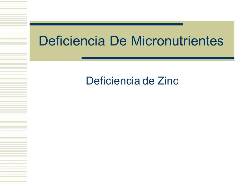 Deficiencia De Micronutrientes