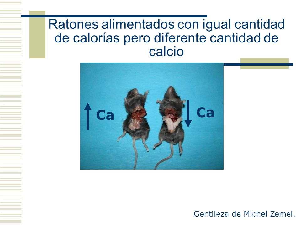 Ratones alimentados con igual cantidad de calorías pero diferente cantidad de calcio