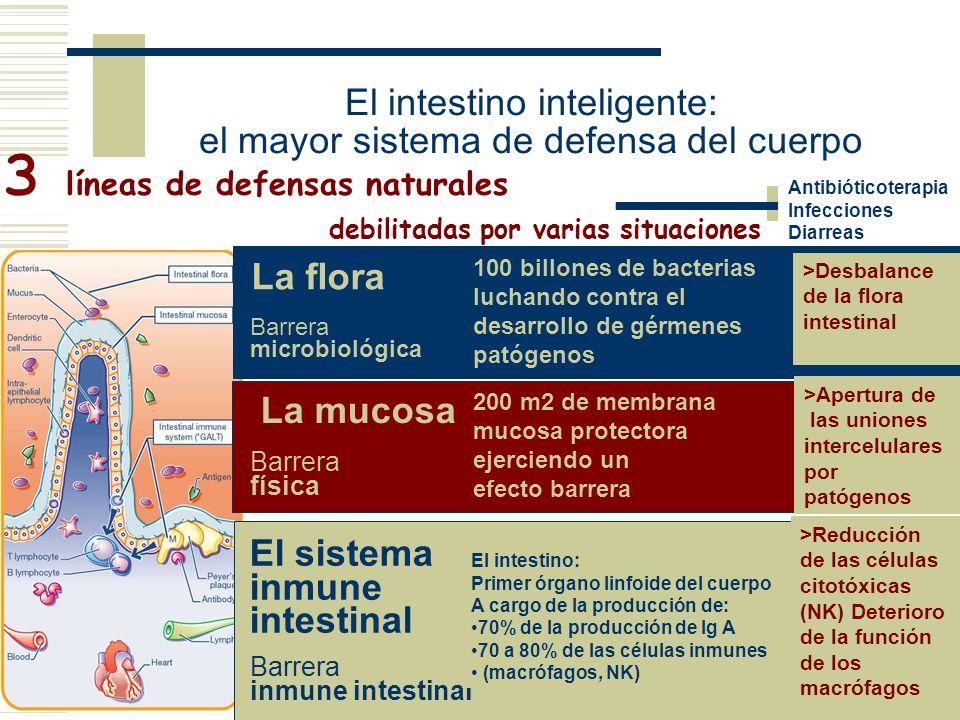 El intestino inteligente: el mayor sistema de defensa del cuerpo