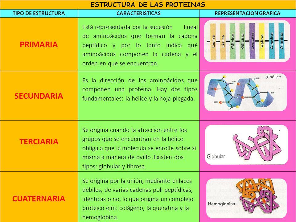 Proteinas por la chica - 2 10
