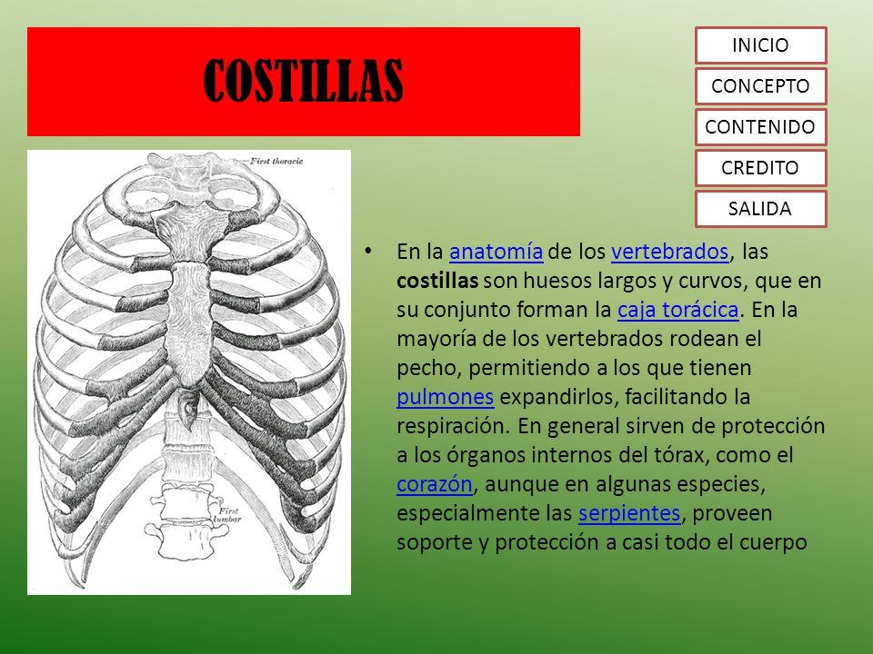 Fantástico Anatomía De Salida Torácica Colección de Imágenes ...