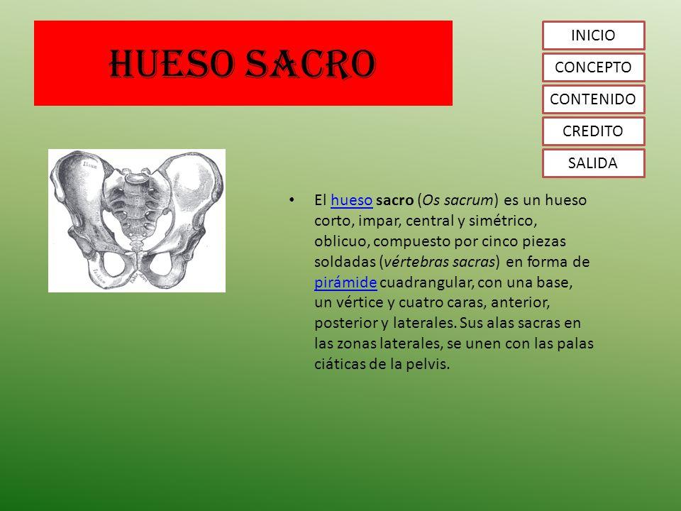 Famoso Anatomía Sacro Molde - Anatomía de Las Imágenesdel Cuerpo ...