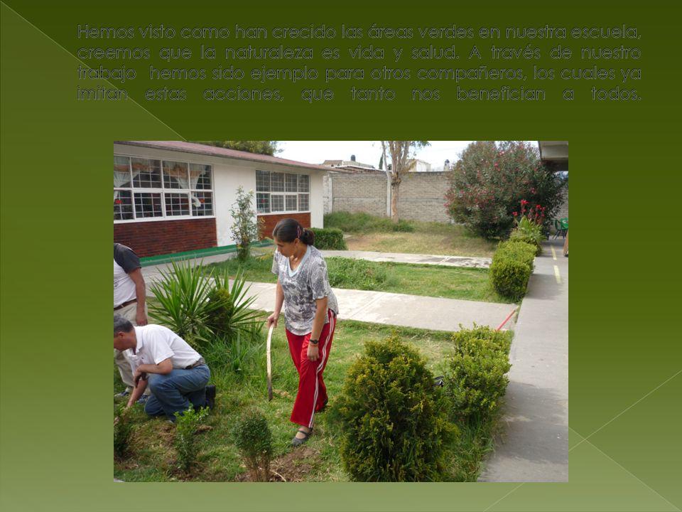 for Cct de la escuela