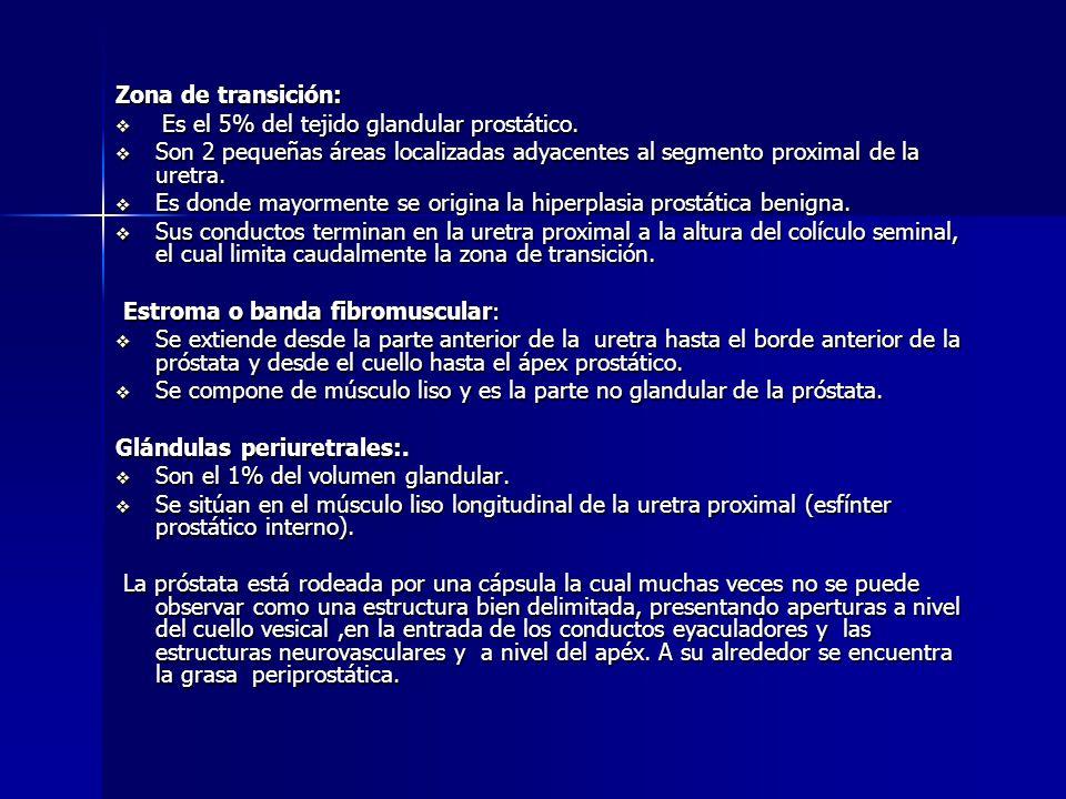 Bonito Haz Neurovascular La Anatomía De La Próstata Friso - Imágenes ...