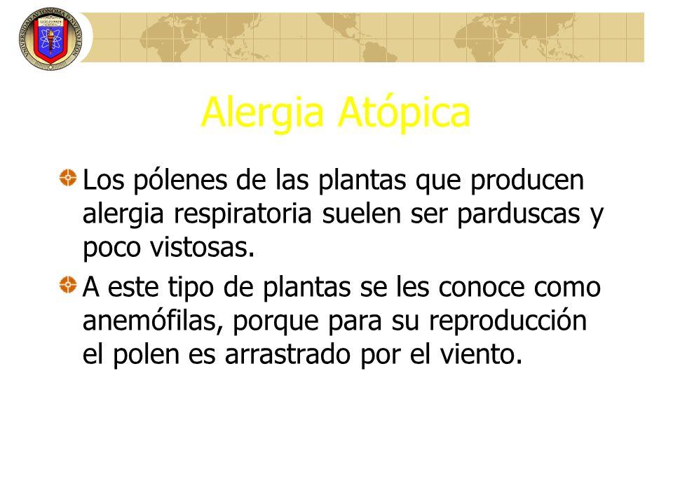 Alergia Atópica Los pólenes de las plantas que producen alergia respiratoria suelen ser parduscas y poco vistosas.