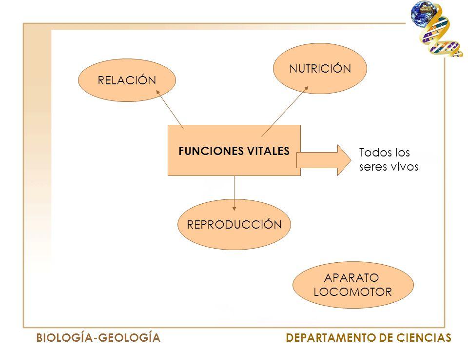 Amigos Auto Sales >> UNIDAD 1 FUNCIONES VITALES. - ppt descargar