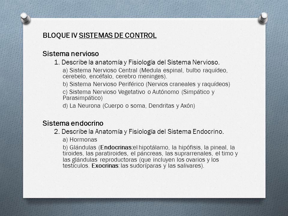 Magnífico Anatomía Y Fisiología Del Sistema Nervioso Hoja De Examen ...