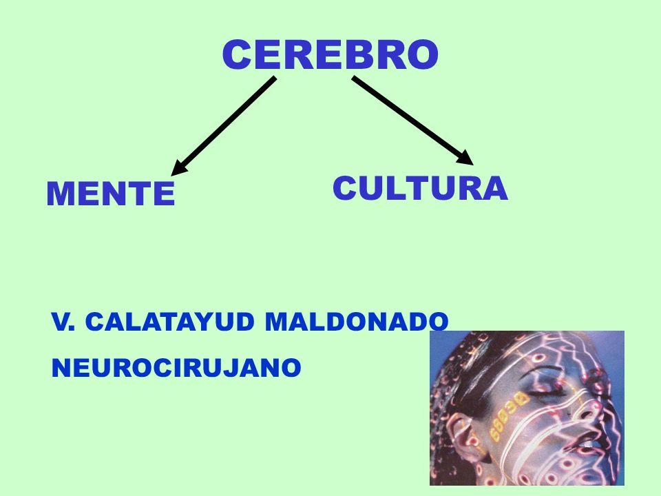 CEREBRO CULTURA MENTE V. CALATAYUD MALDONADO NEUROCIRUJANO
